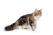 CAT 04 RK0241 01