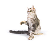 CAT 04 RK0301 01