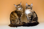 CAT 04 AL0001 01