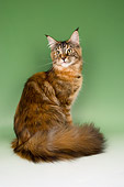 CAT 04 AL0003 01