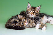 CAT 04 AL0004 01