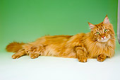 CAT 04 AL0009 01