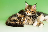 CAT 04 AL0010 01