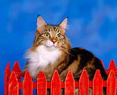 CAT 04 RK0004 01