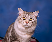 CAT 04 RK0155 02