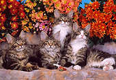 CAT 04 RK0199 05