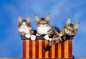 CAT 04 RK0206 05
