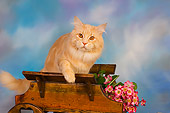 CAT 04 RK0223 01