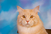 CAT 04 RK0225 01