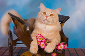 CAT 04 RK0227 01