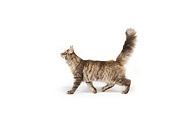 CAT 04 RK0228 01