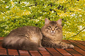 CAT 04 RK0238 01