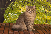 CAT 04 RK0239 01