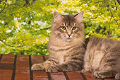 CAT 04 RK0240 01