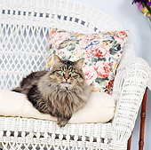 CAT 04 RS0017 01