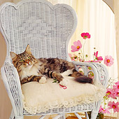 CAT 04 RS0026 05