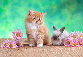 CAT 06 RC0013 01