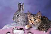 CAT 06 RK0005 02