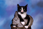 CAT 06 RK0007 02