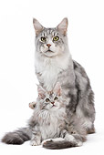CAT 07 JE0001 01