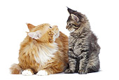 CAT 07 JE0004 01