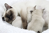 CAT 07 JE0005 01