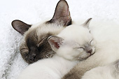 CAT 07 JE0007 01