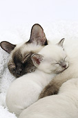 CAT 07 JE0008 01