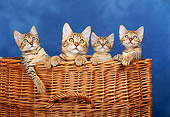 CAT 07 KH0004 01