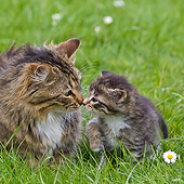 CAT 07 KH0008 01