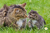 CAT 07 KH0011 01