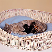 CAT 07 RS0006 03