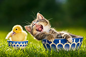 CAT 08 KH0001 01