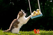 CAT 08 KH0002 01