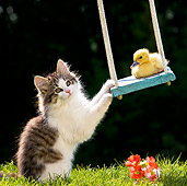 CAT 08 KH0003 01