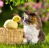 CAT 08 KH0007 01