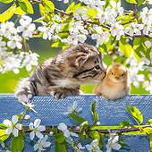 CAT 08 KH0014 01
