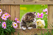 CAT 08 KH0015 01