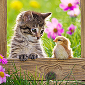 CAT 08 KH0016 01
