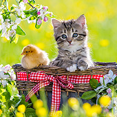 CAT 08 KH0018 01