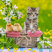 CAT 08 KH0019 01