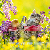 CAT 08 KH0020 01