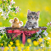 CAT 08 KH0021 01