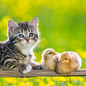 CAT 08 KH0024 01