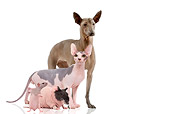 CAT 09 JE0002 01