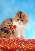 CAT 09 RC0004 01