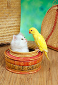 CAT 09 RC0006 01