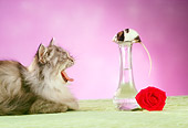 CAT 09 RC0008 01