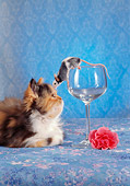 CAT 09 RC0013 01