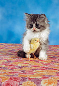 CAT 09 RC0014 01